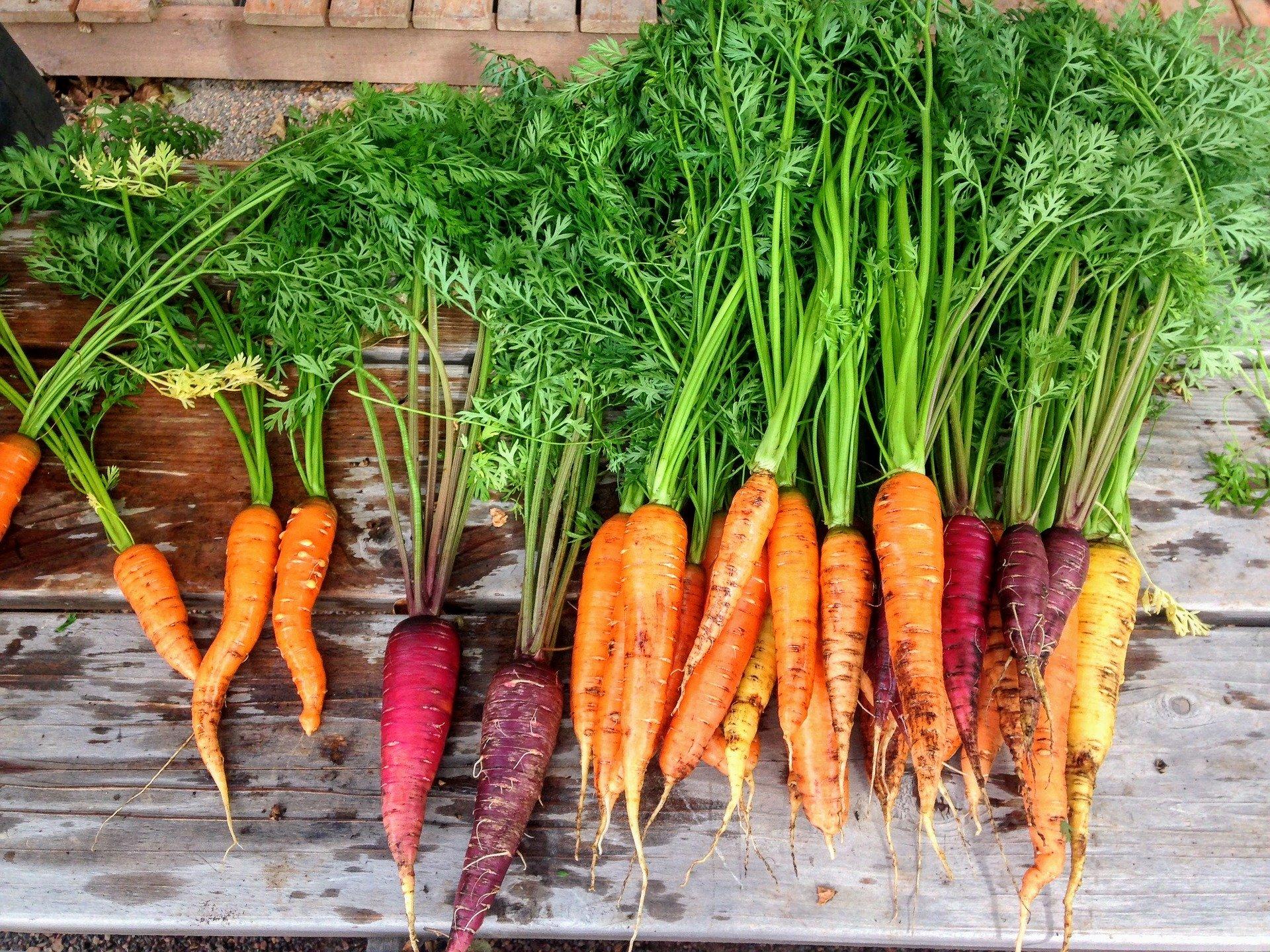 carrot-2743498_1920